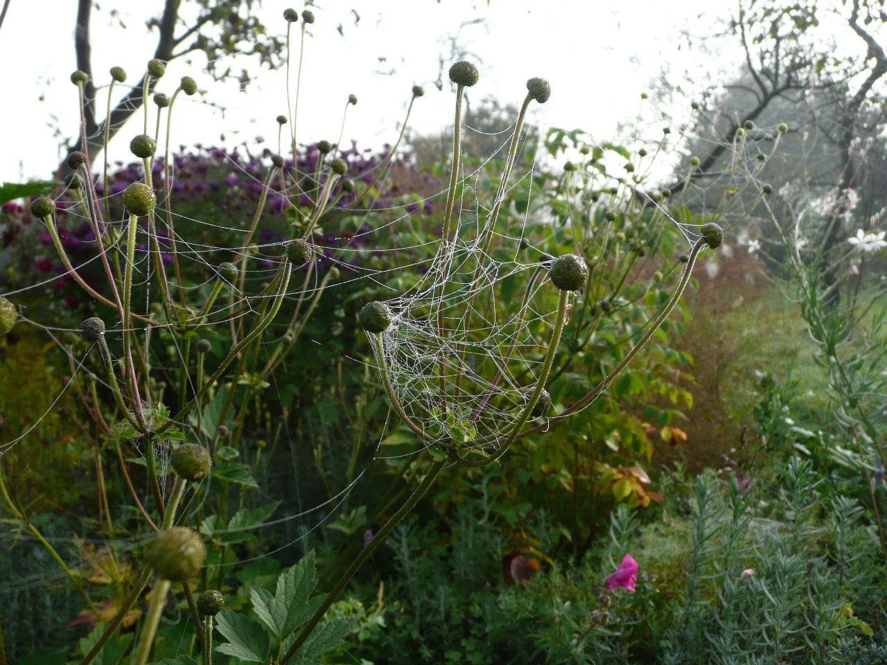 Sirren an den Hufeweisen - sanfte Netze entspinnen sich...